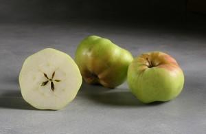 Calville Blanc d'Hiver apple