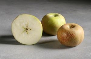 Pomme Grise Apple