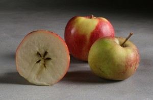 Tompkins King Apple