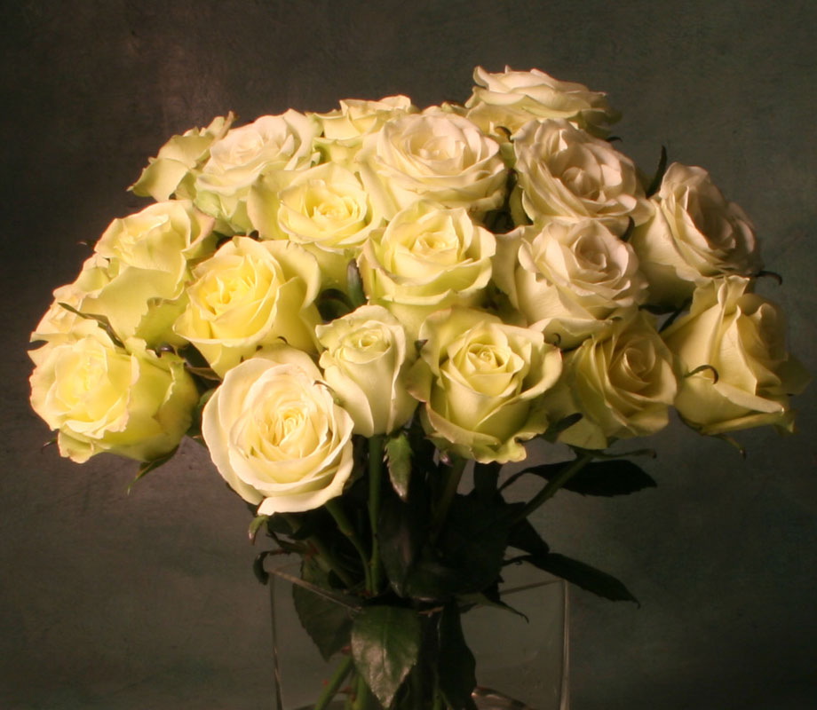 Roses for Casual Date - Valentines Day
